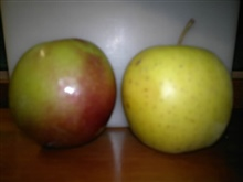 Plum and apple_20121005